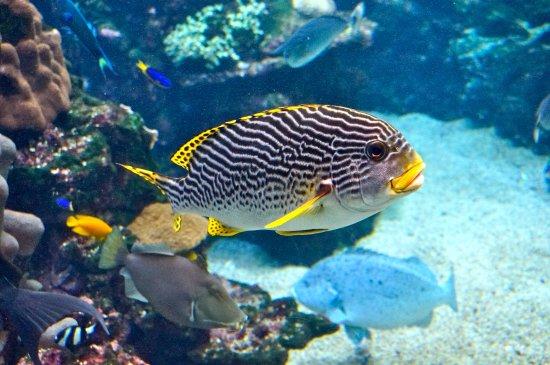 Aquarium des Lagons Nouvelle Caledonie: Aquarium de Nouméa