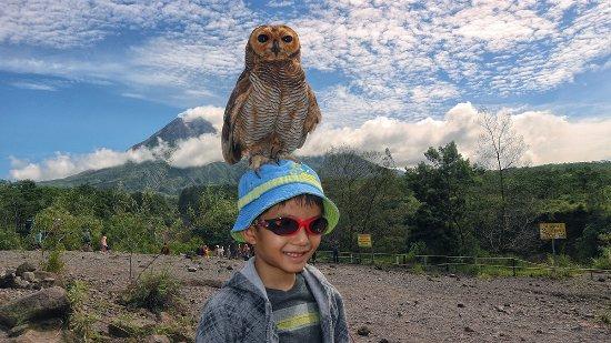 jogja city tour - Picture of Andelis Tour, Yogyakarta Region