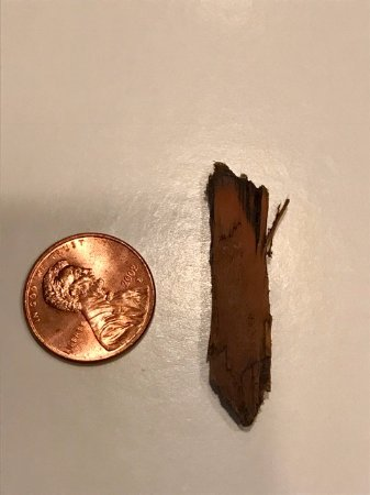 Pleasanton, Kaliforniya: Chunk of wood (?) found on our pizza; penny for scale