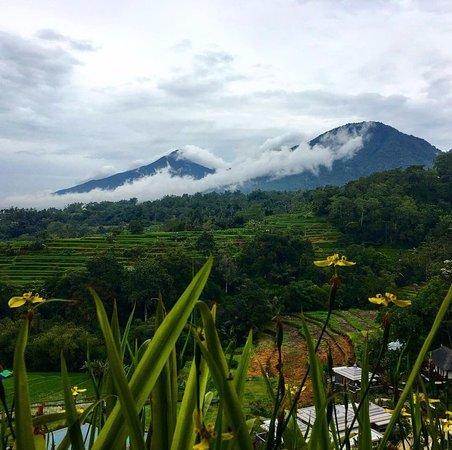 Baturiti, Indonésia: Stunning view from room in main building. Photo by @SassyPotatoStrikesAgain