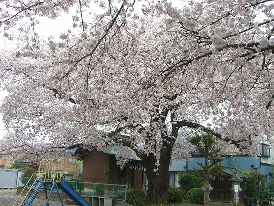 Ageo, ญี่ปุ่น: 神社境内
