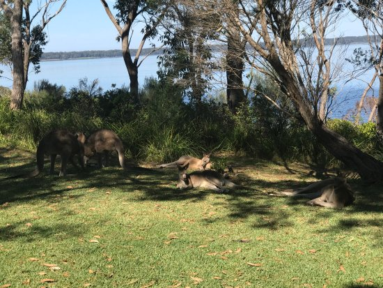 Sanctuary Point, Australië: photo0.jpg