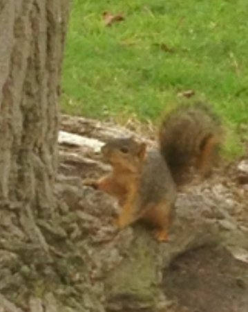 Fountain Valley, CA: Squirrel at Mile Square Park