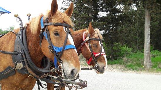 Montagnana Val di Pesa, Italia: I bravi cavallini....