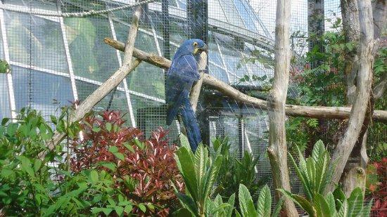 Parc Zoologique de Paris: des oiseaux multicolores