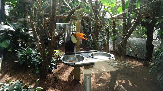 Parc Zoologique de Paris: Toucan en train de manger