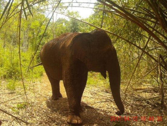 Sen Monorom, Kamboja: 2017_0412_104631_001_large.jpg