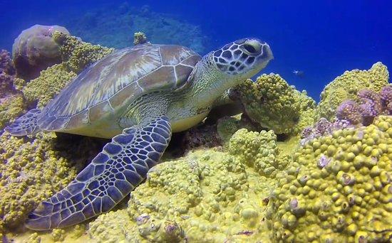 tortue sur aquarium flic en flac フリック アン フラック ticabo