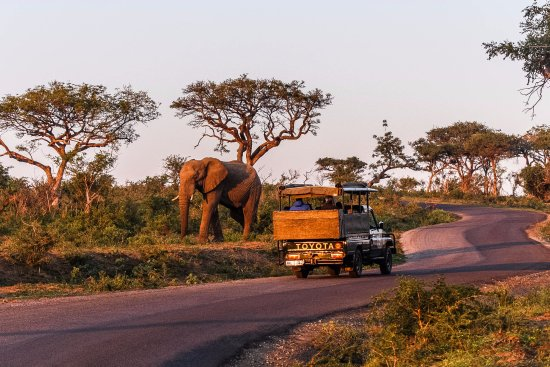Heritage Day Tours & Safaris: Nice close up sighting of Elephants while on safari tour