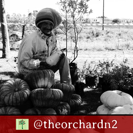 Grabouw, แอฟริกาใต้: The Orchard Farm Stall - Monthly farmer's market