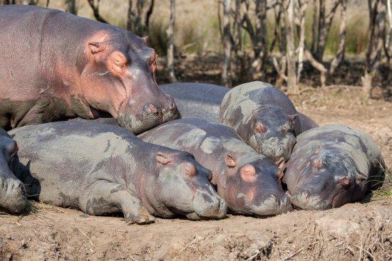 S:T Lucia, Sydafrika: The sleeping pod