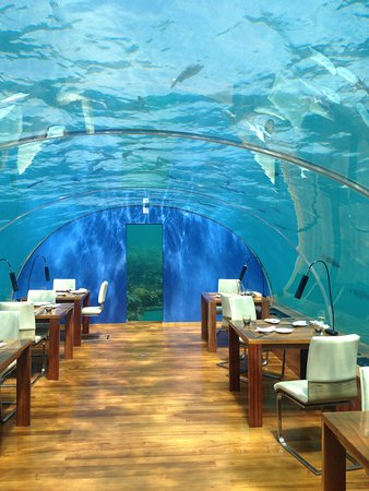 Ithaa restaurant picture of conrad maldives rangali for Ithaa prices