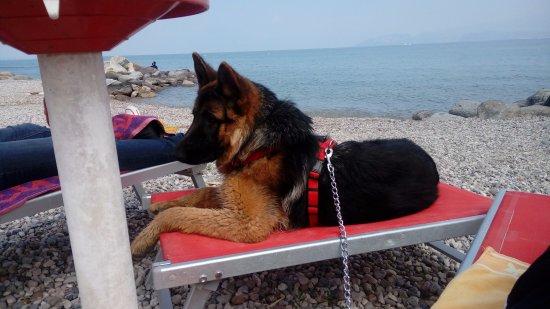 Bau Beach - la Spiaggia di Braccobaldo : Lettino per cani