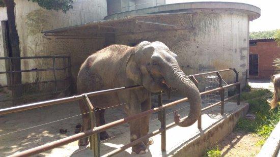 Elefante Picture Of Giardino Zoologico Di Pistoia