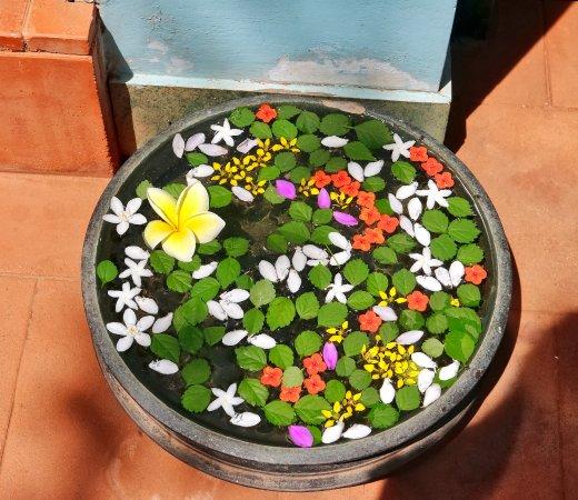 Villa Jacaranda : Disse blomster byder dig velkommen ved indgangen
