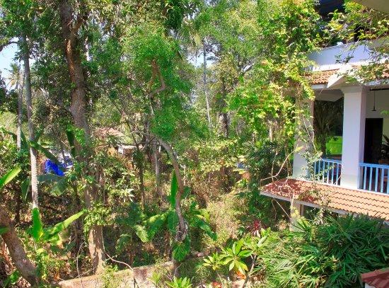 Villa Jacaranda: haven set fra vores altan