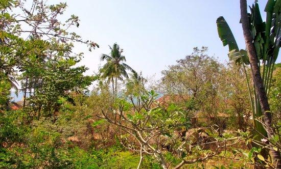 Villa Jacaranda: lidt mere hav og træer