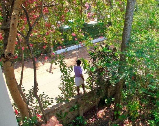 Villa Jacaranda: han plukker frugt
