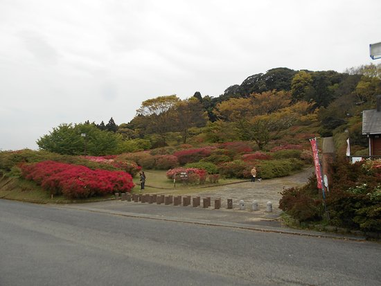 Kurume, Japan: 駐車場から見上げた園内高所のツツジ