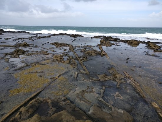 Southland Region, Nueva Zelanda: Evidence of the petrified forest on the shoreline