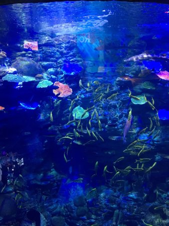 One of Inner Harbor's most popular attractions, the National Aquarium features an incredible 20, animals in award-winning habitats. Explore a tropical rainforest, the animals of the Australian Outback, an Atlantic coral reef, hundreds of jellyfish, 4D immersion films and their newest exhibit the