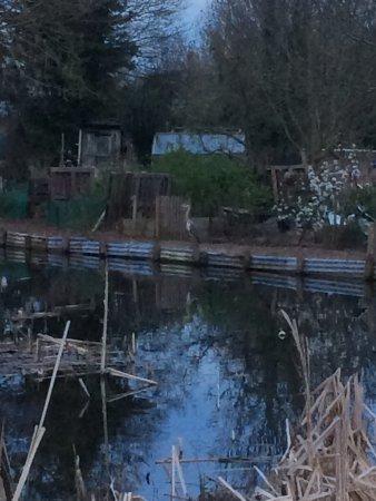 Stonebridge Pond: Stonebridge Pond
