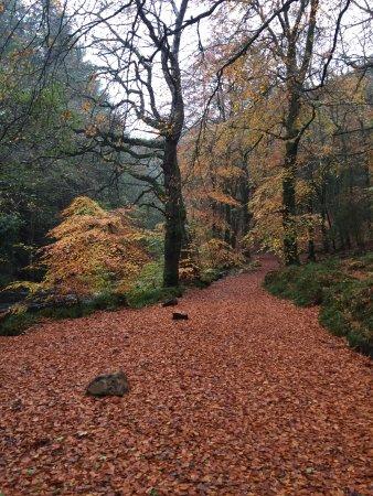 Drewsteignton, UK: Nearby walks
