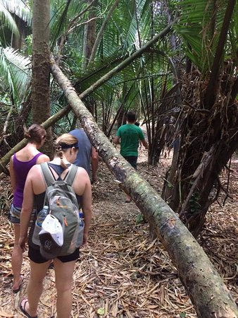 Placencia, Belize: We Trekking the jungle. Recent Overnight Trip ans Easter Tours