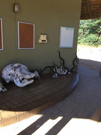 Kasane, Botsuana: photo2.jpg