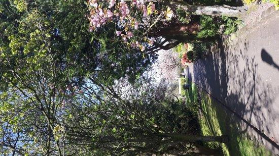 Giffnock, UK: Bloomin' Giffnock!🌺🌻🌼🌷
