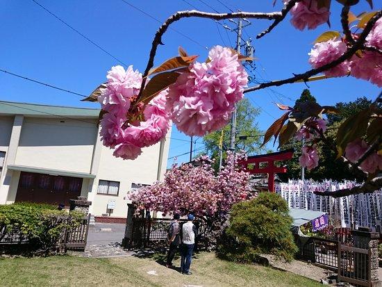 Kaizu, اليابان: DSC_0002_large.jpg