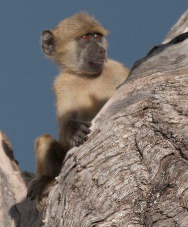 Foto Hwange National Park