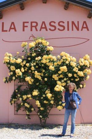 Caorle, Italien: la nostra rosa nel momento di massima bellezza!!