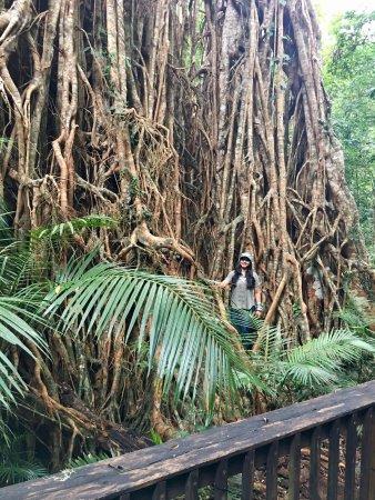Yungaburra, Australia: photo1.jpg
