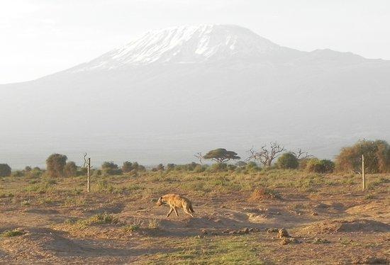 Amboseli National Park Photo