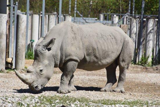 Wels, Αυστρία: Zoo Schmiding