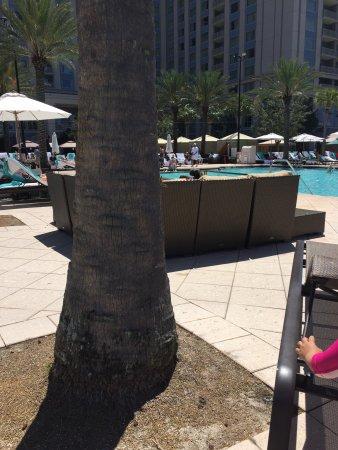 Waldorf Astoria Orlando: Piscina, tranquila aunque un poco difícil conseguir reposeras
