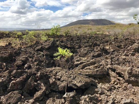 Masaya, Nicaragua: Lavafeld richtung Vulkan