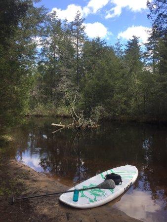 Shamong, NJ: Batso river  paddle