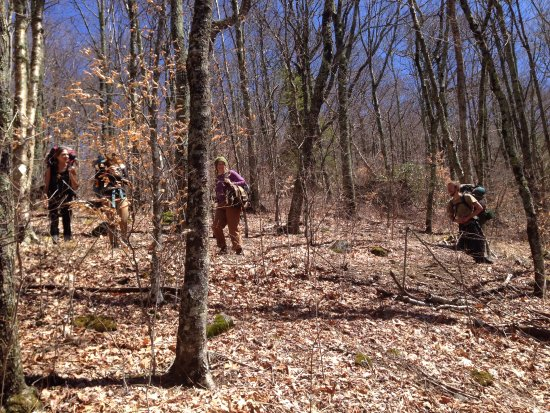 Barnardsville, NC: Alive and Wild Retreats hike