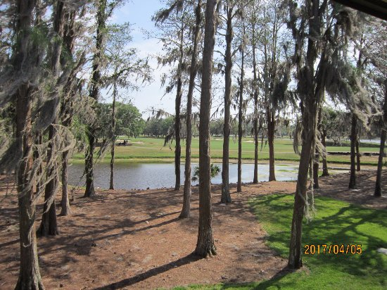 Palm Harbor, FL: Island Course from our suite.