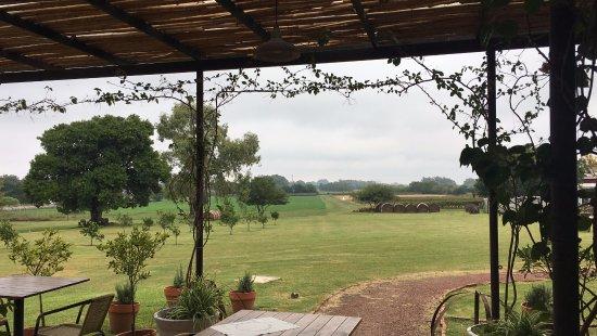 Posada CampoTinto: Vista dos vinhedos do restaurante da Posada