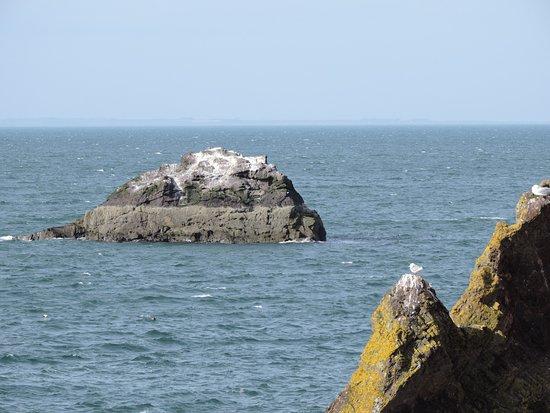 Dunbar coast