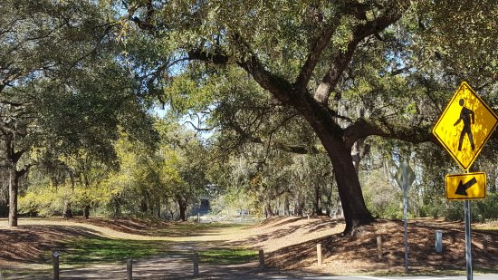 Famous Angel Oak Tree Picture Of Sites Insights Tours Of Charleston Day Tours Charleston