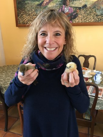 Inn at Charlotte Bed and Breakfast: Baby chicks and ducks!