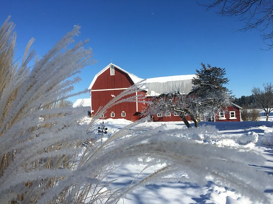 Williamston, MI: Snowy barns