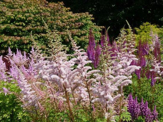 Saint Andrews, Canadá: flora