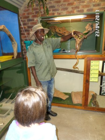 The Crags, South Africa: Ken taking out the corn snake which all the members of the tour are able to hold