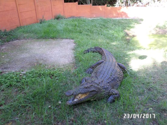 The Crags, South Africa: The nile crocodile in its enclosure