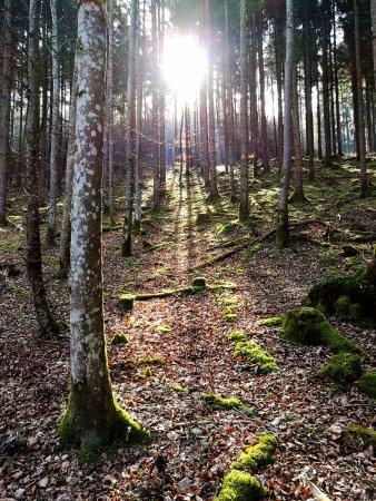 Beuron, Deutschland: Eine große Strecke des Weges wandert man durch schöne Wälder.